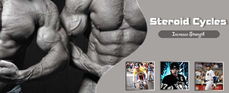 Steroid Cycles